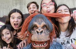 furious-monkey-house